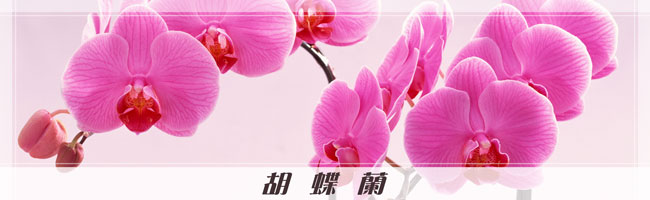 orchid_header_photo.jpg